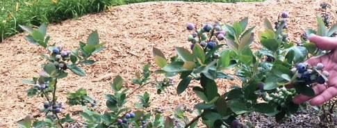 Secret Garden Tour Pensacola Federation Of Garden Clubs